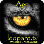 Leopard TV Wildlife Magazine